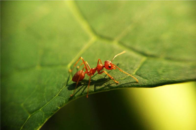 ant on a leafe
